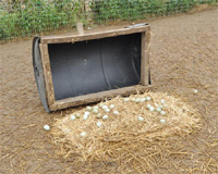Pheasant Hut for Laying Eggs